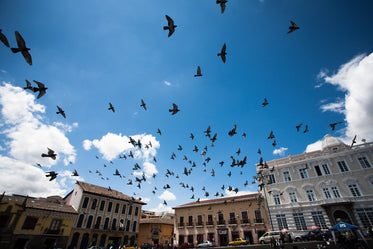 birds flying over urban centre