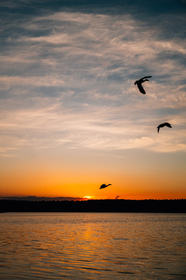 birds silhouetted by the setting sun