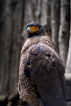 black and grey bird with a yellow face