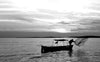 black and white photo a person throwing a fishing net
