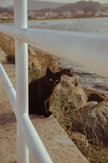 black cat sits by the rocks