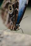 blue and brown butterfly on tree