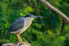 blue and white bird stands outdoors within lush trees