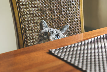 Browse Free HD Images of Blue Eyed Cat Peeking