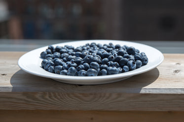 blueberry plate on patio