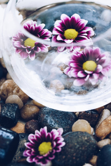 bowl of flowers on stone