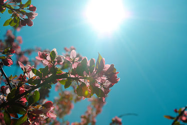 branches with pink flowers against a blue sky