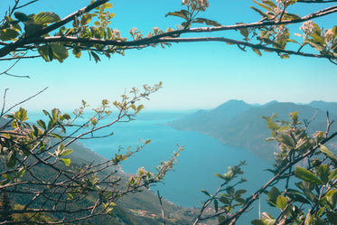 branches with spring blossoms frame a mountian view