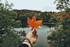 bright fall leaves in hand