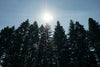 bright sun above tall forest