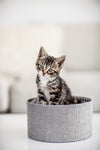 brown and white kitten in a box