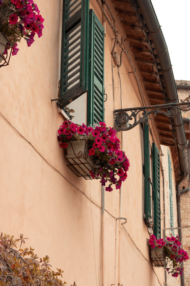 building with baskets of purple petunias out each window