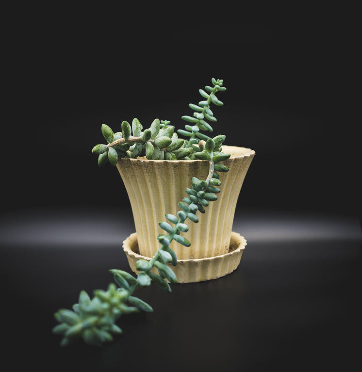 Burro's Tail In Yellow Ceramic Planter