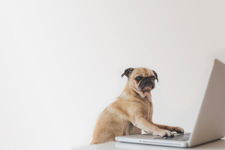 Business Pug Working On Laptop
