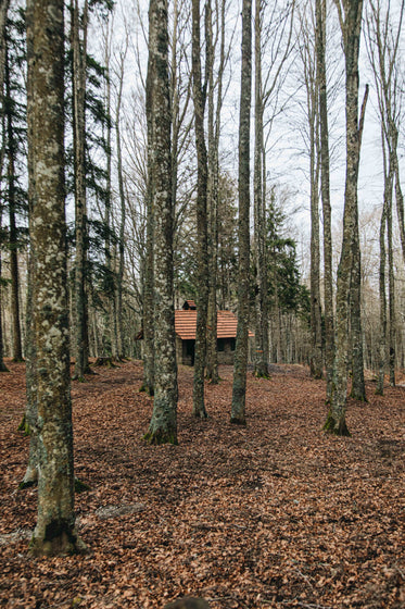 cabin in the woods surrounded by trees