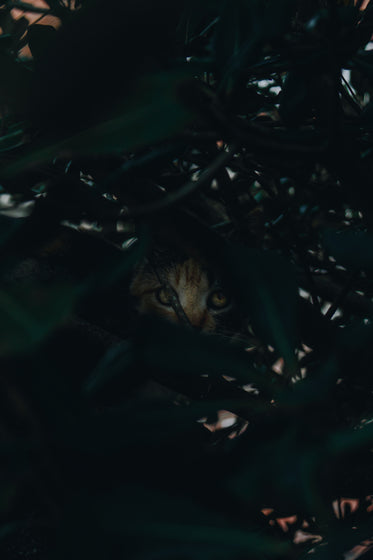 cat eyes in a dense plant at night