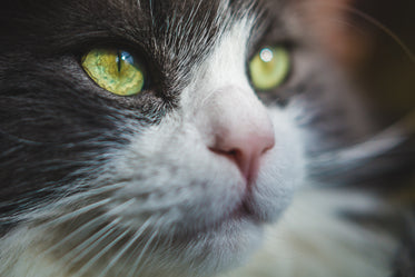 Picture of Cat Eyes Photo - Free Stock Photo