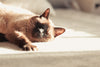 cat naps on white surface in the sunshine