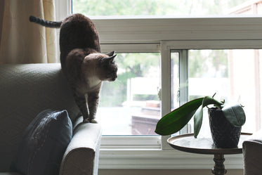Free Cat On Sofa Near Window Image: Browse 1000s of Pics