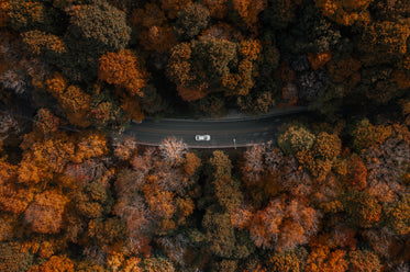 centered car driving through forest