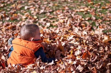 Free Child Playing In Fall Leaves Photo — High Res Pictures