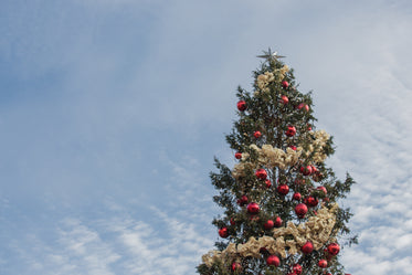 Free Christmas Tree Under Sky Photo — High Res Pictures