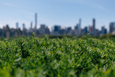 city behind greenery