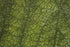 Browse Free HD Images of Close Up Green Leaf Texture