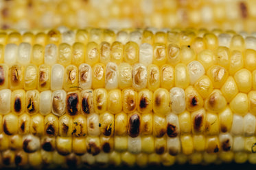 close up grilled corn
