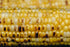 High Res Close Up Grilled Corn Picture — Free Images