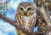 close up of a young brown and white owl