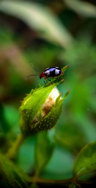 close up of an insect sitting on plant