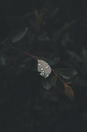 close up of droplets on a leaf