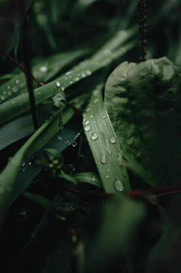 close up of droplets on wild green leaves
