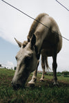 close up of horse eating in farmers field