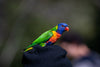 close up of small colorful parrot