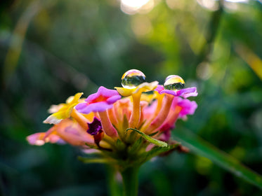 close up of water drops on colorful tubular flowers