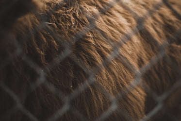 close up on bison fur