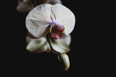 close up on delicate orchid