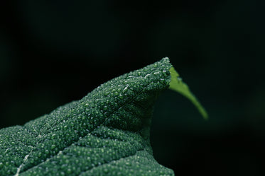 closeup of water on green leaf