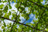 cloudy blue sky through bright green leaves