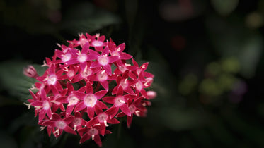 cluster of bright pink flowers