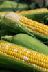 Picture of Cobs Of Corn At Market — Free Stock Photo