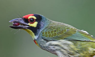 colorful bird holding berry in beak