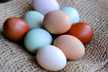 colorful bunch of fresh organic eggs in burlap