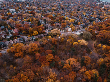 colorful trees surrounding houses