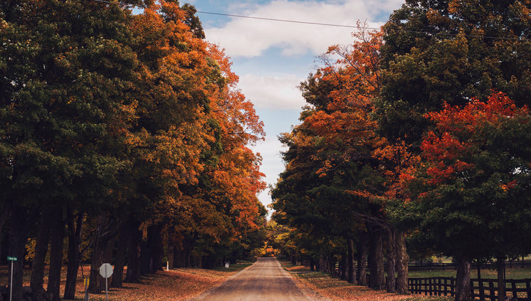 country-road-in-fall.jpg?width=746&forma