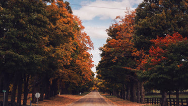 Free Country Road In Fall Image: Stunning Photography
