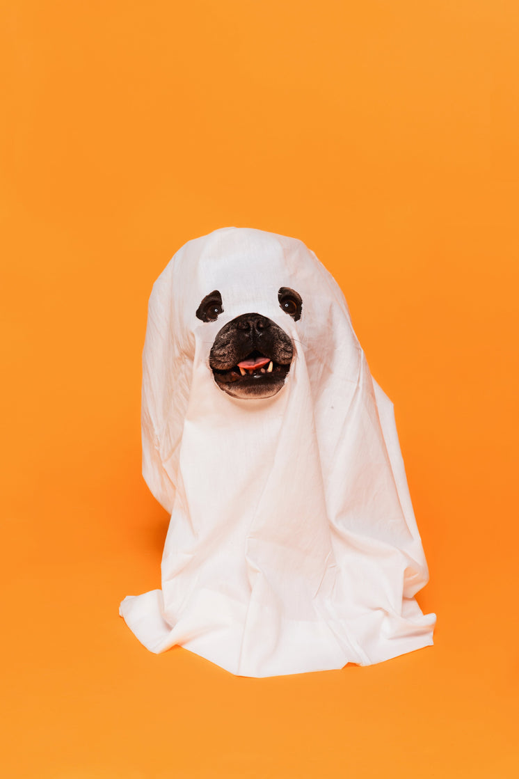 Cute Halloween Dog Ghost Costume