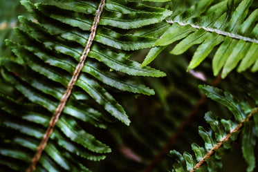 Browse Free HD Images of Dark Green Foliage